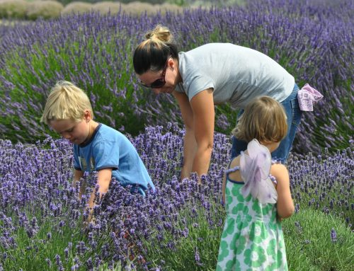 Practical Tips for Enjoying Beautiful Lavender