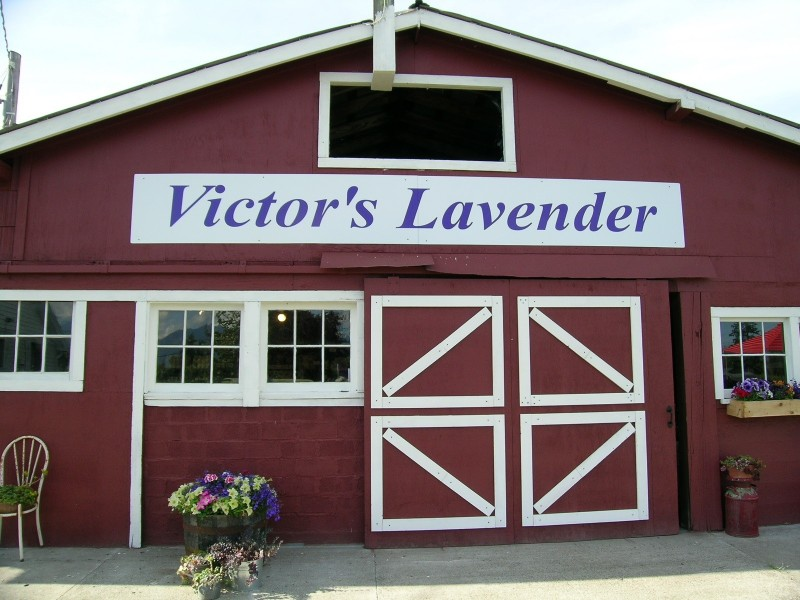 Victors Lavender Farm