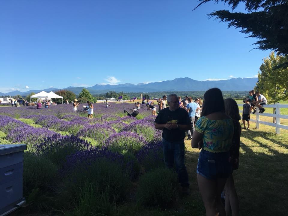 Sequim Lavender Festival 2020.2019 Washington Lavender Festival Sequim Lavender Experience
