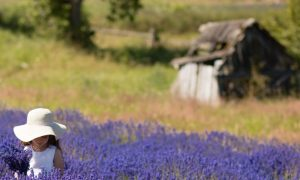 Cedarbrook Lavender Farm