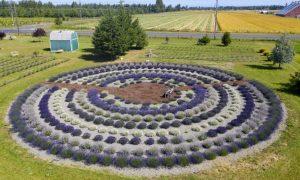 Victors Rain Shadow Lavender Farm